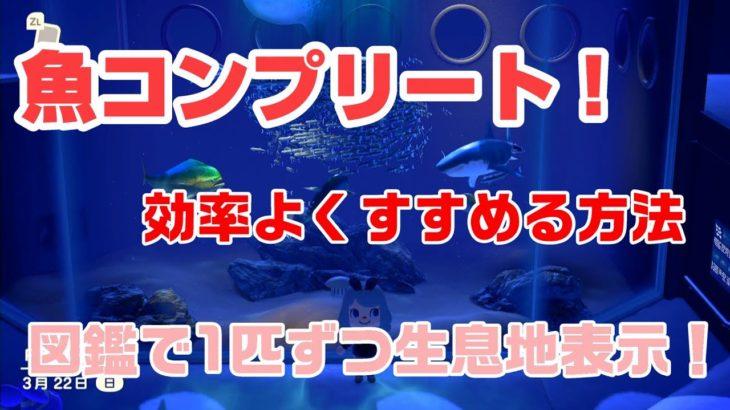 どうぶつ の 森 魚 レア あつまれ 【あつ森】魚の釣り方とコツ【あつまれどうぶつの森】|ゲームエイト