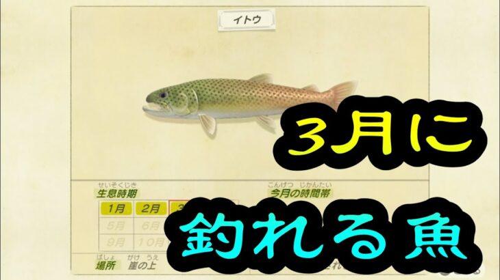 3月に釣れる魚【あつまれどうぶつの森】