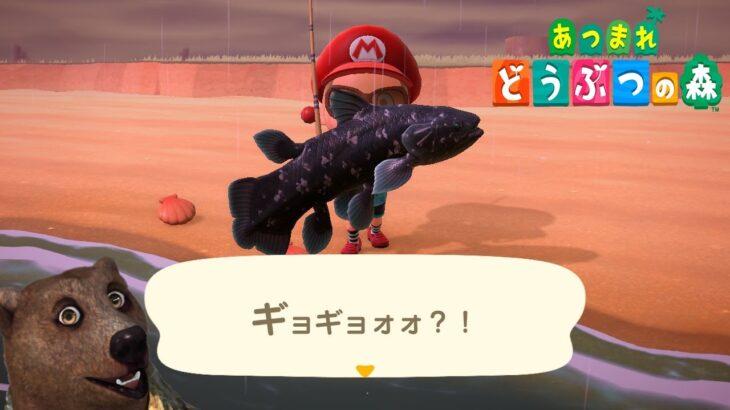 【#あつまれどうぶつの森】離島ツアーします!【Nintendo Switch】