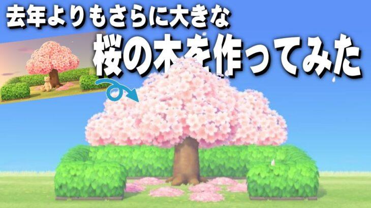 【あつ森】島クリエイト 去年作った大きな桜の木よりもさらに大きな桜の木を作ってみた 【あつまれどうぶつの森】作り方も紹介