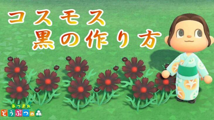 黒のコスモスの作り方【コスモス#03】【花の交配】【あつ森】