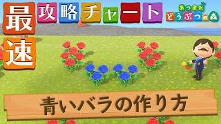 【あつ森】世界一シンプルな青いバラの作り方|咲かせ方【あつまれどうぶつの森】