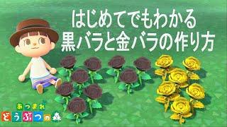 黒バラと金バラの作り方【花の交配】【あつ森】